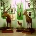 Muzeul de Ştiinţele Naturii şi Cinegetică - Orașul Vatra Dornei