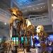 Muzeul de Istorie Naturala Grigore Antipa